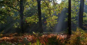 Forêt domaniale de Rambouillet
