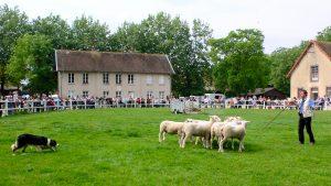 Moutons de la Bergerie et chien de berger