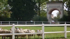 Cour impériale et moutons à la Bergerie