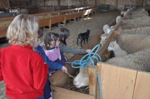 Festival de la laine