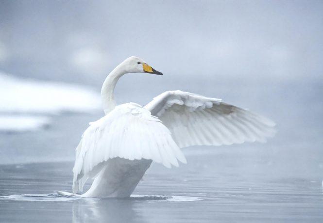 Hokkaido ©Vincent-Munier