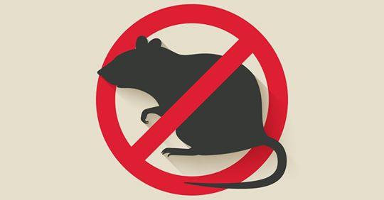 Lutte contre les rats une affaire de tous